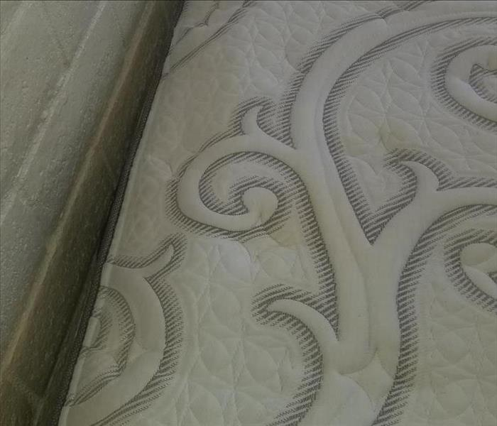 Spot Removal - Mattress Upholstery After