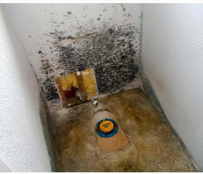 Mold Damage Remediation and Restoration Before