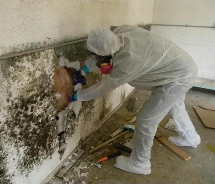 Mold Remediation Expert Advice:Home Basement Mold and Water Damage