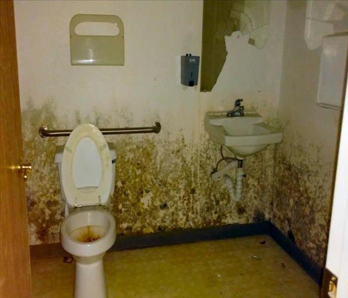 Mold Remediation Mold, Moisture, Damp Indoor Home and Commercial Spaces