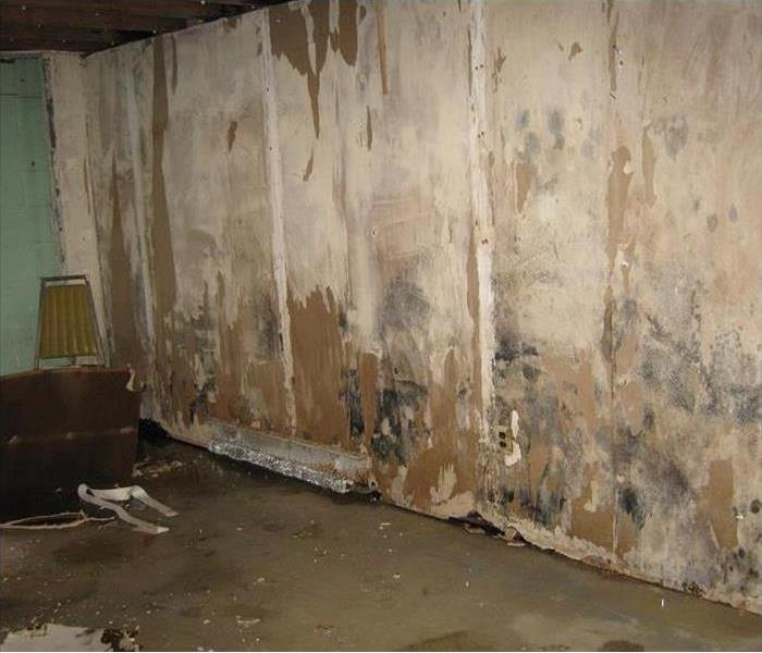 Mold Remediation The Dos and Dont's of Mold Removal