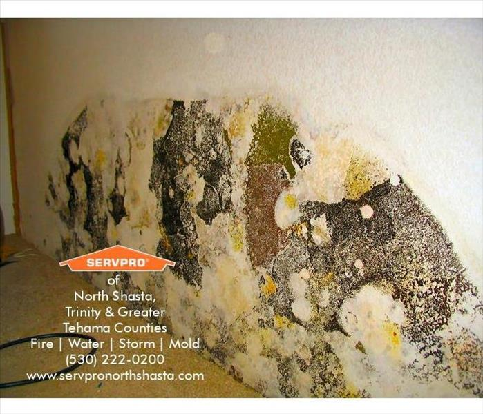 Mold Remediation Mold Damage Remediation Services