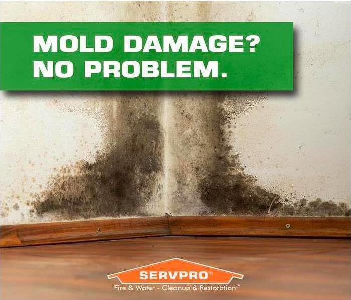 Mold Remediation Toxic Mold in Commercial and Residential Buildings