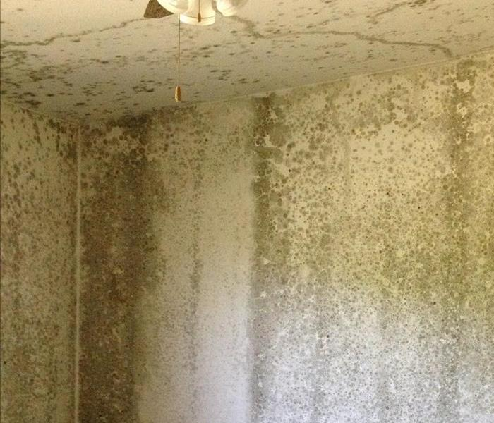 Mold Remediation Shasta County, CA - IICRC - Carpet Cleaning Repair Installation Certification - Mold and Water Damage